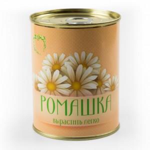 Цветок в банке *Ромашка* растение в банке именная ромашка